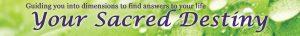 YSD logo banner